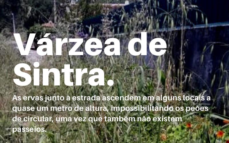 Ervas com mais de um metro de altura na Várzea de Sintra