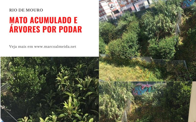 Rio de Mouro: Mato acumulado e falta de poda de árvores