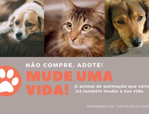Animais de companhia – NÃO COMPRE, ADOTE!