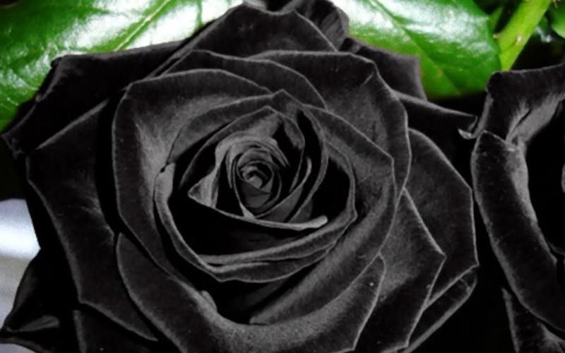 Dia Internacional da Mulher - O Eterno Feminino - Por cada lágrima, um sorriso