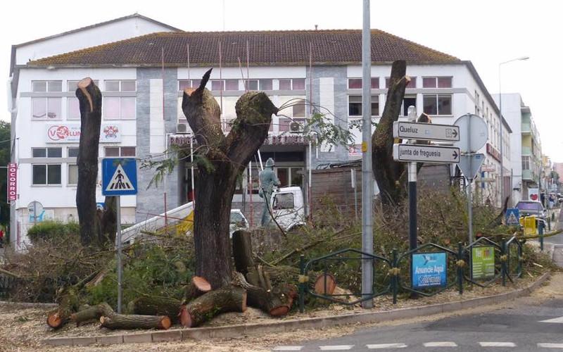 Questionámos o abate de árvores em Queluz